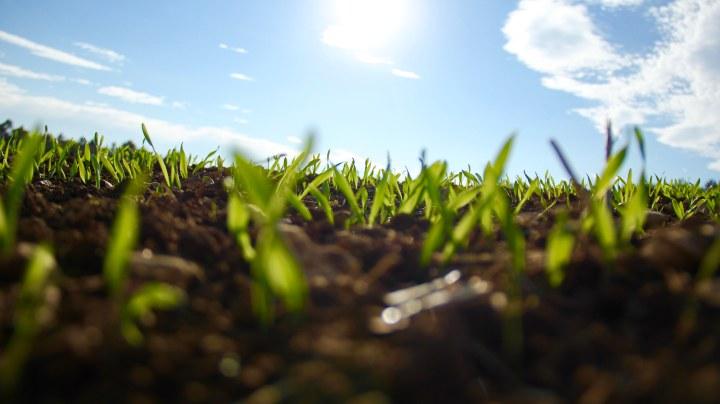 Grass over Gala.